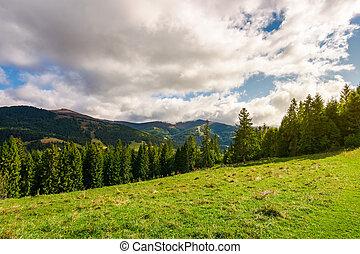 beautiful Carpathian landscape in early autumn. spruce...