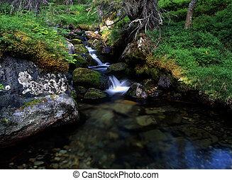 Beautiful cascade stream in forest