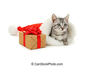 Beautiful cat in christmas hat with gift box isolated on white