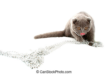 Beautiful cat isolated on white background