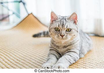 Beautiful cat looking