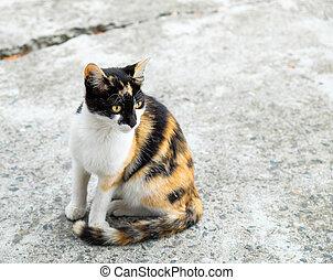 Beautiful cat on the street