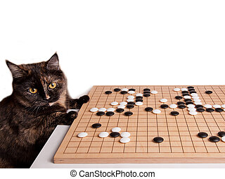 Beautiful Cat playing boardgame Go - Cat playing boardgame ...