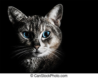 Beautiful cat portrait