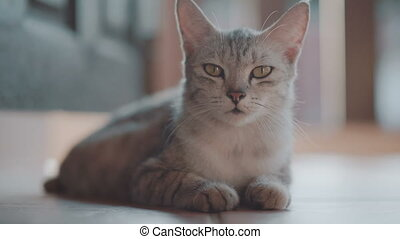 Beautiful cat relaxing on the terrace - Beautiful gray cat...