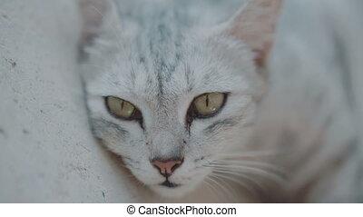 Beautiful cat relaxing on the terrace - Beautiful gray cat...