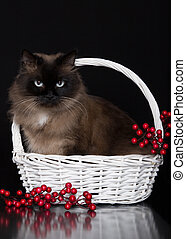 Beautiful cat sitting in a white basket with berries on a black background