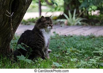 beautiful cat sitting in the grass