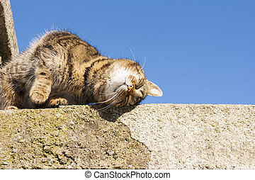 Sweet cat on the wall with sky in the background