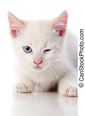 Beautiful cat with blue eyes winking a eye
