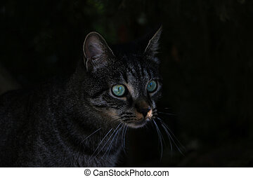 Beautiful cat with green eyes in the dark.