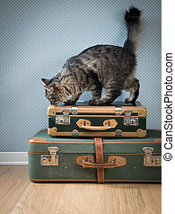 Beautiful cat with vintage suitcases