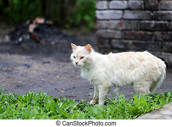 Beautiful cats photographed