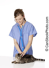 Beautiful Caucasian woman Veterinarian examining a kitten