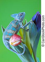 Beautiful chameleon - Beautiful big chameleon sitting on a...
