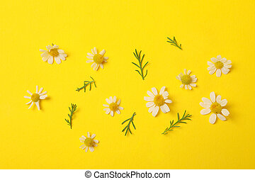 Beautiful chamomile flowers on yellow background, top view