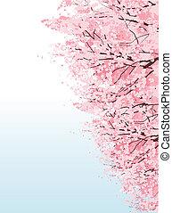 Beautiful Cherry blossom boulevard trees