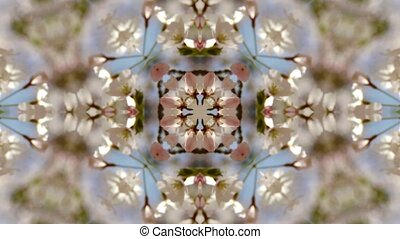 beautiful cherry blossoms tremble in wind,Kaleidoscope.