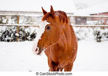 Beautiful chestnut red horse portrait in winter