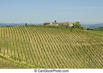 Panoramic view of a vineyard in the Chianti region of Tuscany, Italy