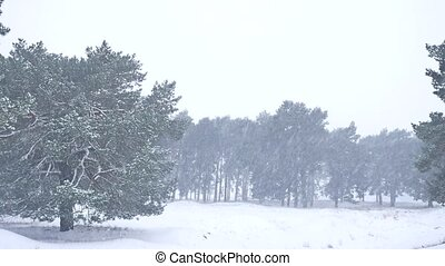 Beautiful christmas blizzard tree in winter landscape in late evening in snowfall nature landscape