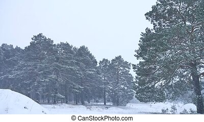 Beautiful christmas blizzard tree in winter landscape in late evening nature in snowfall landscape