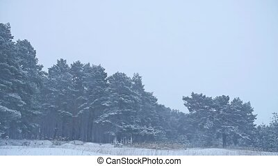 Beautiful christmas nature tree in blizzard winter landscape in late evening in snowfall landscape