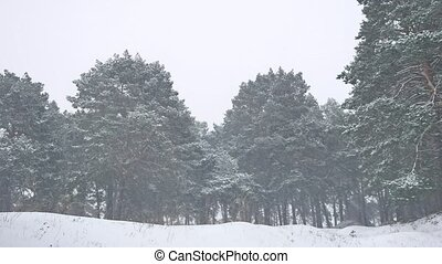 Beautiful christmas tree blizzard in nature winter landscape in late evening in snowfall landscape