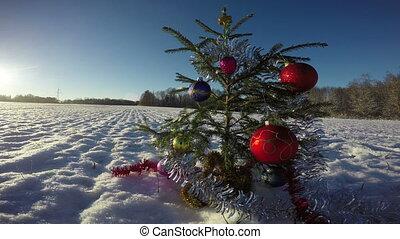 Beautiful Christmas tree on snowy field in evening,  4K
