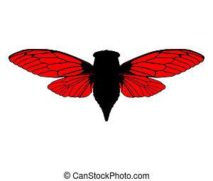 Beautiful cicada