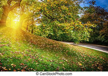 Beautiful city park in autumn