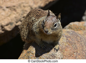 Beautiful Close Up Look Into the Face of a Ground Squirrel