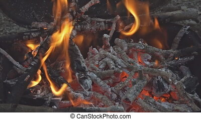 Beautiful closeup camp fire video beech wood burning...