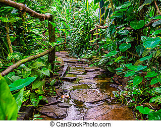 beautiful closeup of a stone path with flowering water in a tropical garden, modern natural architecture