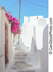 Beautiful cobbled streets with bougainvillea on the old...