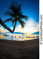 Beautiful coconut palm tree on the beach at sunset time
