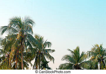 Beautiful coconut palm trees farm nature horizon on tropical sea beach against a pretty blue clear sky with no clouds at sunset sunlight. Summer Holiday Season background photography with copy space.