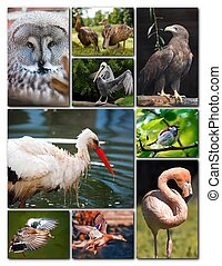 Beautiful collage of different birds