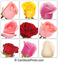 collage of roses from nine photos - Beautiful collage of...