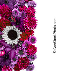 Beautiful collection of sunflower flowers, asters and clematis