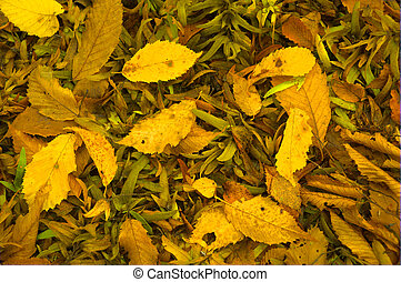 Beautiful color and detail of Autumn leaves on ground
