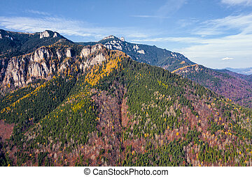 Beautiful colored forest on a rocky mountain