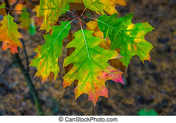 Beautiful colored leaves in autumn background