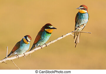 beautiful colored spring birds sit on a branch