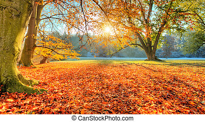 Beautiful colored trees in autumn, landscape photography....