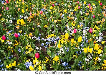 garden full with flowers