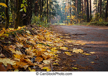 Beautiful colorful autumn fall road in the forest