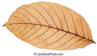 beautiful colorful autumn leafe