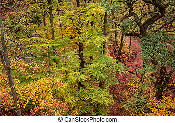 beautiful colorful autumn leaves in forest