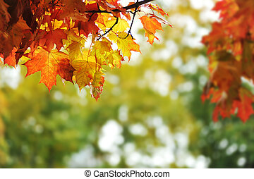 beautiful colorful autumn leaves in the park